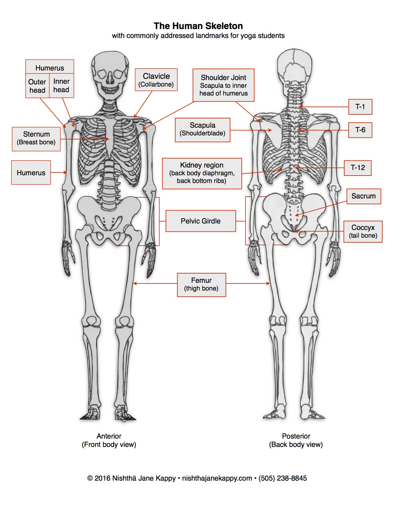 human skeleton tail – lickclick, Skeleton